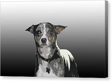 Australian Cattle Dog Sheltie Mix Canvas Print by One Rude Dawg Orcutt