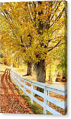 Autumn Leaves Canvas Print by HD Connelly