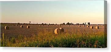 Bales In Peanut Field 2 Canvas Print by Douglas Barnett