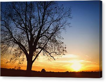 Bare Tree At Sunset Canvas Print by Skip Nall