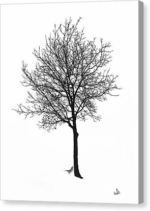 Bare Winter Tree Canvas Print by Michael Flood