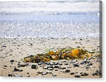 Vancouver Island Canvas Print - Beach Detail On Pacific Ocean Coast by Elena Elisseeva