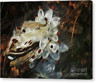 Canvas Print featuring the photograph Beautiful Nature 2 by Jasna Gopic