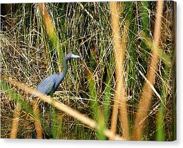 Canvas Print featuring the photograph Bird At Viera by Jeanne Andrews