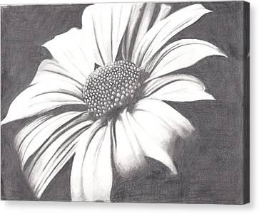 Black And White Flower Canvas Print by Amanda Rhone