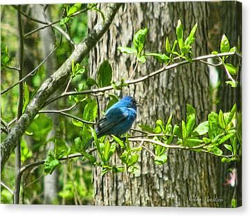Blue Bird Of Happiness  Canvas Print by Debra     Vatalaro