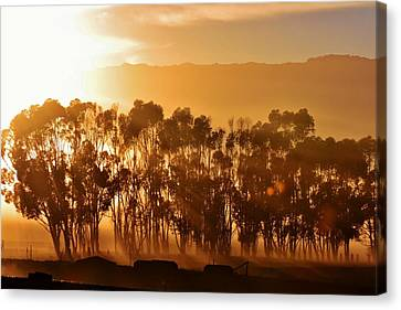 Canvas Print featuring the photograph Blue Gum Trees by Werner Lehmann