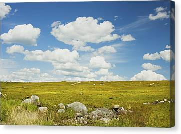 Blue Sky And Clouds Over Blueberry Farm Field Maine Canvas Print by Keith Webber Jr