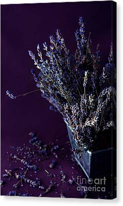 Container Canvas Print - Bouquet Of Lavender by HD Connelly