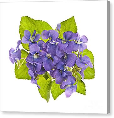 Bouquet Of Violets Canvas Print by Elena Elisseeva