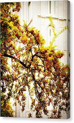 Branch Of Heaven Canvas Print by La Rae  Roberts