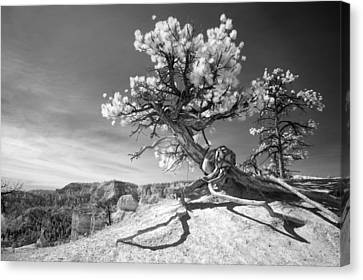 Canvas Print featuring the photograph Bryce Canyon Tree Sculpture by Mike Irwin