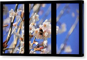 Bumble Bee Canvas Print by Svetlana Sewell