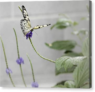 Canvas Print featuring the photograph Butterfly by Nick Mares
