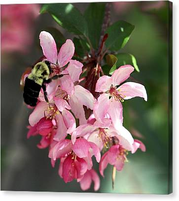 Canvas Print featuring the photograph Buzzing Beauty by Elizabeth Winter