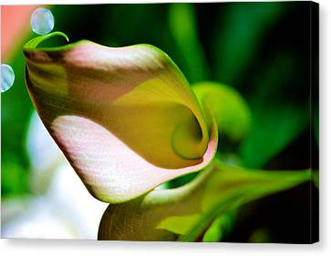 Calla With Circles Canvas Print by Jennifer Woodworth