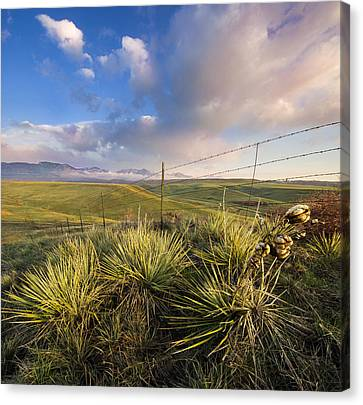Catching The Sun Canvas Print by Tyler Porter