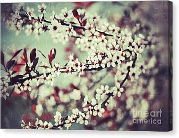Cherry Canvas Print by Traci Cottingham
