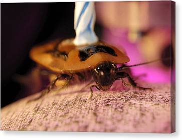 Cockroach Locomotion Study Canvas Print by Volker Steger