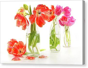 Colorful Spring Tulips In Old Milk Bottles Canvas Print by Sandra Cunningham