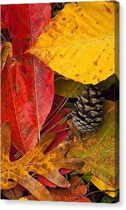 Colors Of Autumn Canvas Print by Andrew Soundarajan
