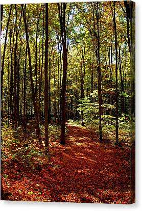 Licht Canvas Print - Come Walk With Me  by Juergen Weiss