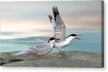Common Tern Canvas Print by Walter Colvin