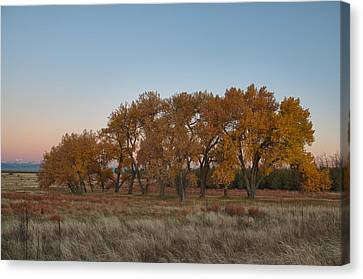 Canvas Print featuring the photograph Cottonwood Grove by Monte Stevens