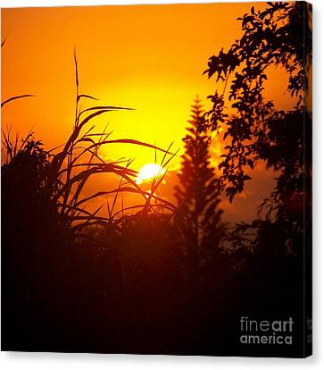 Canvas Print featuring the photograph Coucher De Soleil by Sylvie Leandre