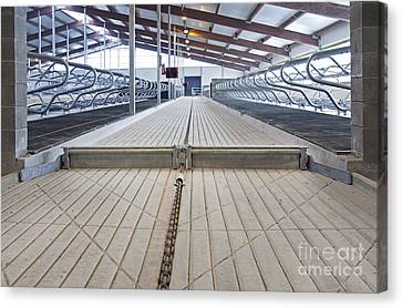 Cowshed Dung Scraper Canvas Print by Jaak Nilson