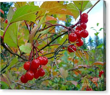 Canvas Print featuring the photograph Cranberries by Jim Sauchyn