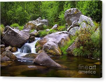 Creek Canvas Print by Carlos Caetano