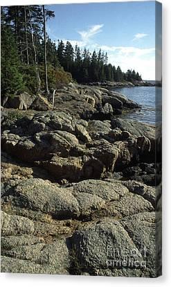 Deer Isle Shoreline Canvas Print by Thomas R Fletcher