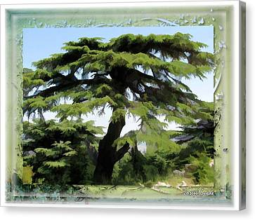 Do-00512 Cedar Forest Canvas Print