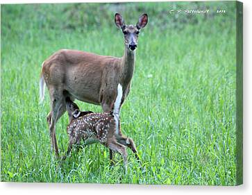 Doe And Fawn Canvas Print by Carolyn Postelwait