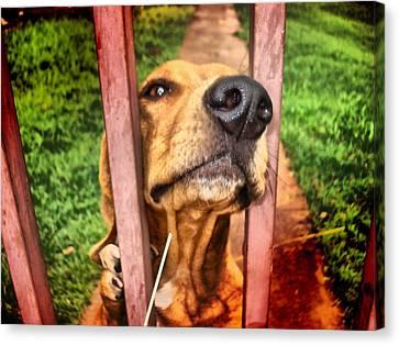 Canvas Print featuring the digital art DOG by Beto Machado