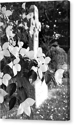 Dogwood In Cemetery Canvas Print by Julie VanDore