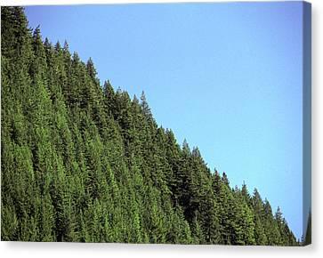 Douglas Fir Forest, British Columbia, Canada Canvas Print by Kaj R. Svensson