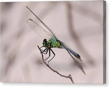 Dragon Fly Canvas Print by Jeanne Andrews