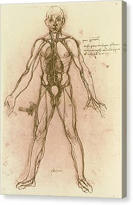 Drawing Of Human Venous System (leonardo Da Vinci) Canvas Print by Mehau Kulyk