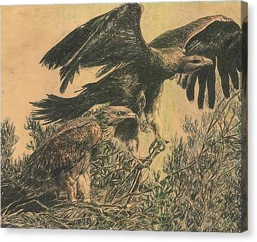 Eagle's Roost Canvas Print