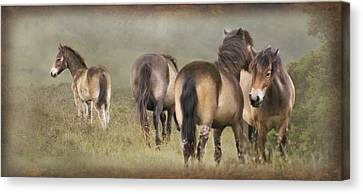 Exmoor Ponies Canvas Print by Ethiriel  Photography