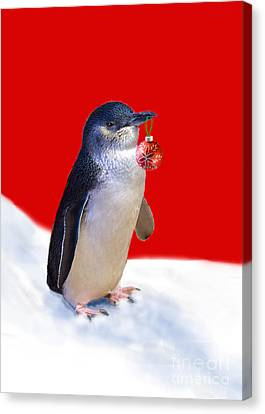 Fairy Penguin For Christmas Canvas Print by Louise Heusinkveld