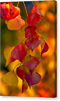 Canvas Print featuring the photograph Fall Color 1 by Dan Wells