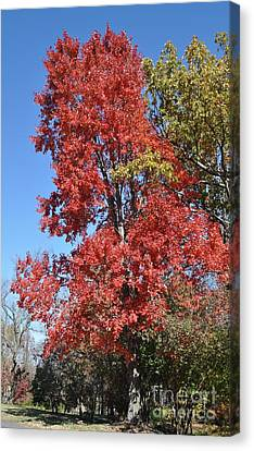 Fall Colors Canvas Print by Denise Ellis