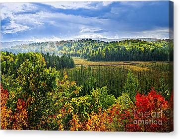 Fall Forest Rain Storm Canvas Print by Elena Elisseeva