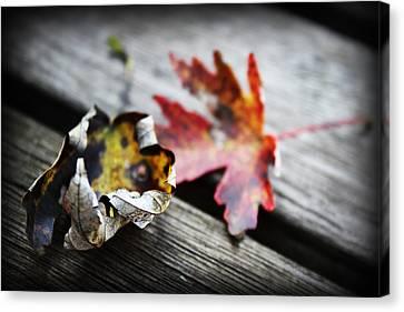 Fall Leaves I Canvas Print