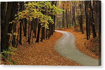 Fall Winding Road  Canvas Print