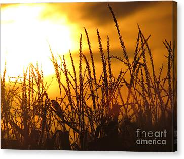 Farming Sunset Canvas Print by France Laliberte