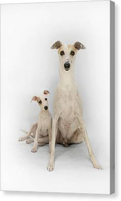 Canvas Print - Father And Son Whippets by John Clum
